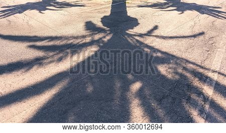 Shadow Of Three Palm Trees On An Asphalt Road
