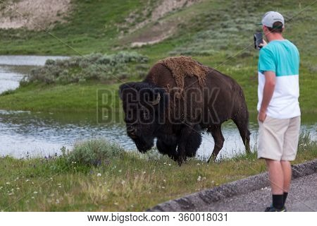 Yellowstone National Park, Usa - July 12 2014:  A Man Takes An Up Close Cell Phone Picture Of A Walk
