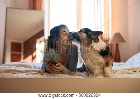 Joyful Young Woman With Dog Welsh Corgi Lying On Bed In Bedroom In Morning. Funny Pet Kissing His Ow