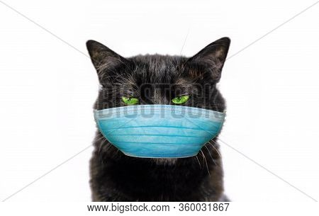 Funny Black Cat With Green Eyes And Surgical Face Mask. Concept Of Cold And Flu Of Pet And Coronavir