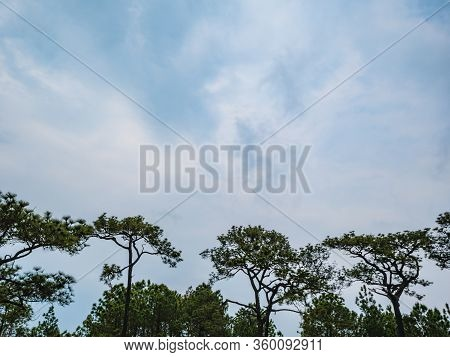 Tree With Beautiful Blue Sky On Phu Kradueng Mountain National Park In Loei City Thailand.phu Kradue