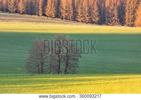 Beautiful Green Spring Rural Landscape With Green Field. Rural Landscape. Spring Landscape. Yellow P