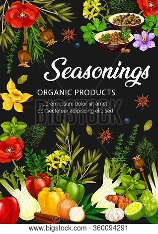 Food Seasonings, Herbs And Condiments. Vector Rosemary, Dill, Pepper And Cinnamon, Garlic, Anise And