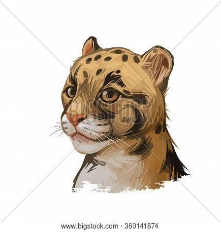 Clouded Leopard Baby Tabby Neofelis Nebulosa Wild Cat From Himalayan, Asian China. Digital Art Illus