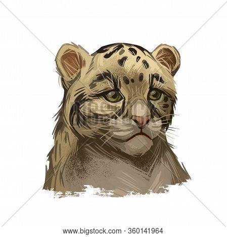 Leopard Babby Tabby Watercolor Portrait Of Exotic Animal. Panther Looking Aside. Felidae Family Memb