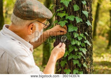 Explore Nature. Pensioner With Magnifier Exploring Forest Autumn Day. Botanist Examine Plants. Old M