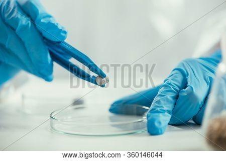 Cropped View Of Biochemist Holding Small Stone With Tweezers Near Petri Dish