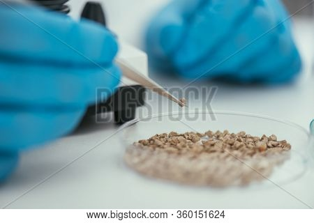 Cropped View Of Biochemist Taking Small Stone From Petri Dish With Tweezers