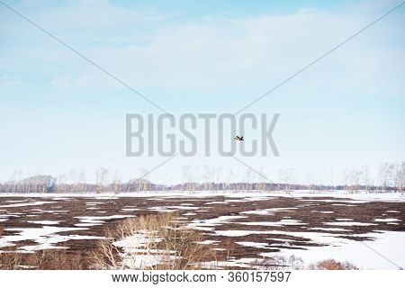 A Wild Duck Flies Over A Field Against A Blue Sky On A Clear Spring Day. Arrival Of Migratory Birds.