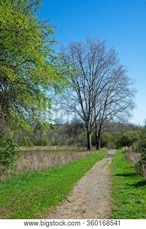 A Bridle Path Through A Meadow Leads Past Two Mighty Oak Trees As Spring Arrives In Northeast Ohio.