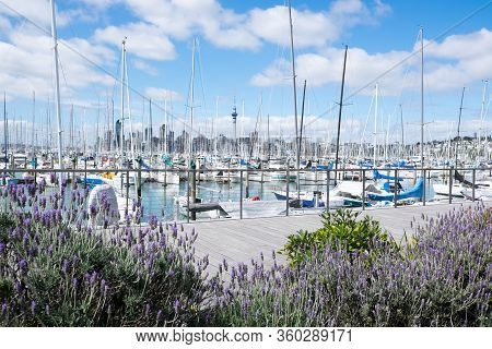 Auckland, New Zealand, Nz - September 16, 2020: View Over Westhaven Marina And Waterfront Promenade.