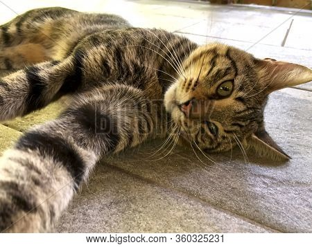 Portrait Of A Street Cat. A Brown Cat Lies On The Floor. A Beautiful Look At The Camera Of A Brown C