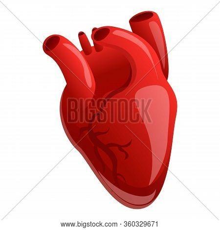 Cardiac Human Heart Icon. Cartoon Of Cardiac Human Heart Vector Icon For Web Design Isolated On Whit
