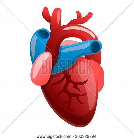 Cardiology Human Heart Icon. Cartoon Of Cardiology Human Heart Vector Icon For Web Design Isolated O