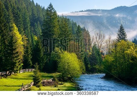 Mountain River On A Misty Sunrise. Gorgeous Landscape With Fog Rolling Above The Trees In Fresh Gree