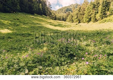 Nature Background With Beautiful Summer Alpine Valley