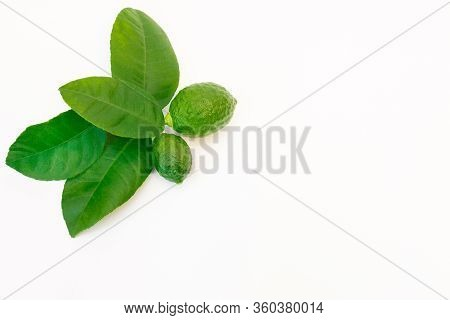 Lemon Tree Twig With Leaves And Two Ripe Small Lemon Fruits On A White Background, With Copy-space,