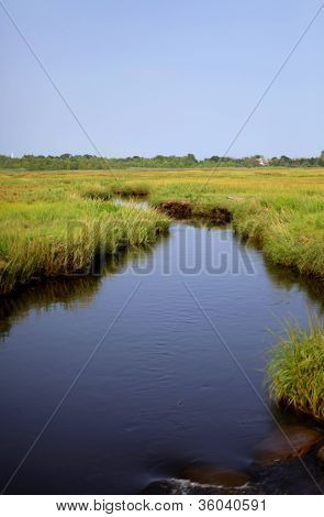 The river in the Marsh