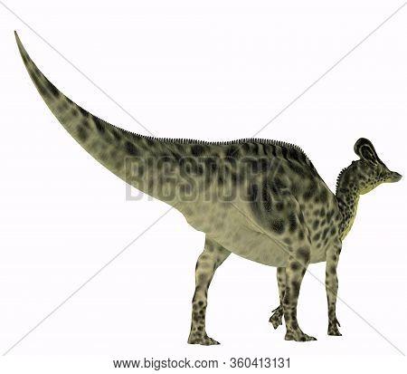 Velafrons Dinosaur Tail 3d Illustration - Velafrons Was A Herbivorous Hadrosaur Dinosaur That Lived
