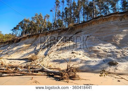 Baltic Sandy Coast After Severe Storms 2020. Destroyed Shore, Fallen Trees. Steep And Sandy Coast Of