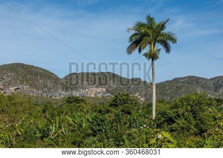 The Vinales Valley (valle De Vinales), Popular Tourist Destination. Tobacco Plantation. Pinar Del Ri