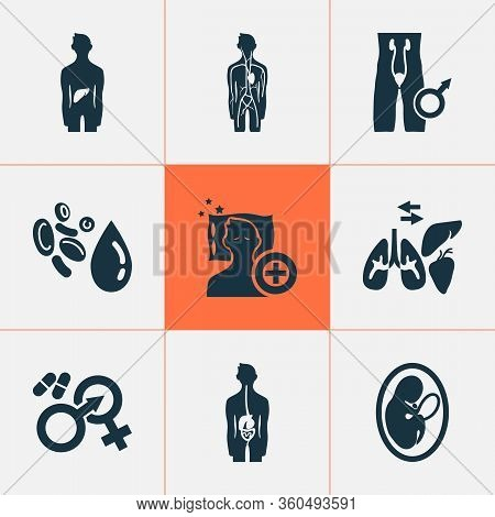 Anatomy Icons Set With Gastroenterology, Andrology, Sleep Medicine Arterial Elements. Isolated Illus