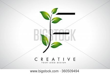 Leaf Letter F Logo Design With Green Leaves On A Branch. Letter F With Nature Concept. Eco And Organ