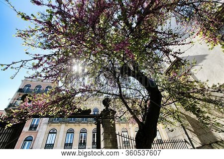 Colorful Gardens And Tiled Facades With Vintage Streetlight In Lisbon Streets In Spring.