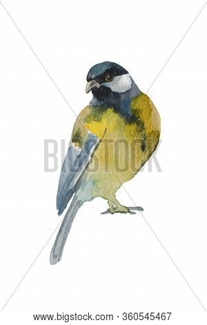 Blue Tit Bird Isolated On White Background. Original Watercolor Illustration Of European Titmouse Bi