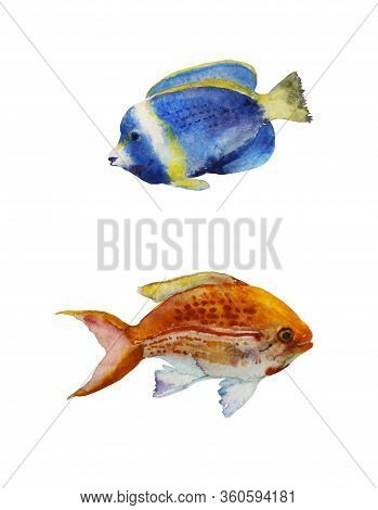 Set Of Watercolor Tropic Fish Blue And Orange Isolated On White Background. Powder Blue Tang Surgeon