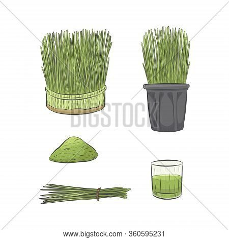 Green Wheatgrass Growing Vector Collection. Glass Of Green Raw Juice. Hand Drawn Healthy Nutrition S