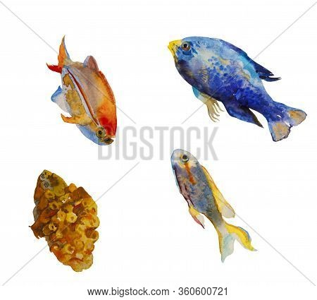 Set Of Watercolor Tropic Fish And A Coral Isolated On White Background. Orangetail Damsel Fish, Reds