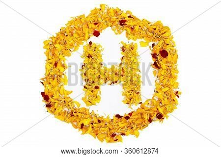 Letter H In Spring Flower Petal Hexagon. Marigold Petal Alphabet Isolated On White Background.