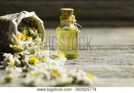 Essential chamomile oil in glass bottle with dry camomile flowers, fragrant daisy oil, beauty treatm