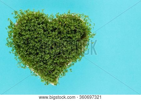 Alfalfa Seed Sprouts, Healthy Diet Superfood And Clean Eating Concept, Heart Shaped Seed Sprouts Top