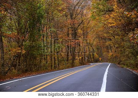 Road Sign Warns Of Curvy Roads Ahead.  Wet And Damp Autumn Foliage Lines Both Sides Of Highway Throu