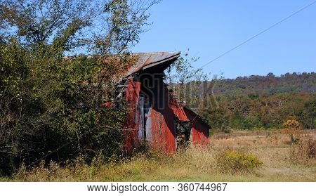 Autumn Covers The Trees In The Background Of An Old Abandoned Barn In North Arkansas.  Overgrown, Ru