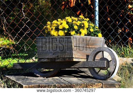 Rustic, Wooden Wheel Barrow Is Full Of Yellow Daisies And Mums.  Barrow Sits On Top Of A Wooden Plat