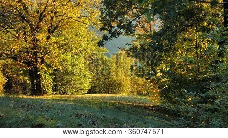Garden With Trees In The Dolomites 3