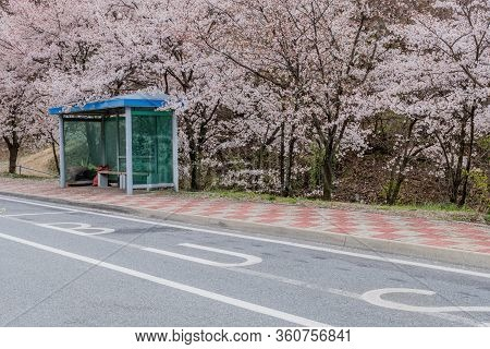 Cheery Blossom Tree Behind Expressway Bus Stop With Tree.