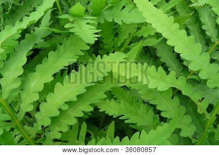 close-up of green ferns