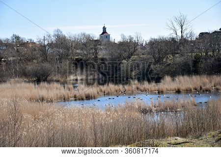 Springtime View Over A Small Pond By The Village Sodra Mockleby On The Island Oland In Sweden