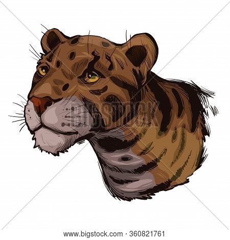 Clouded Leopard Neofelis Nebulosa Wild Cat Occurring From Himalayan, Asian China. Digital Art Illust