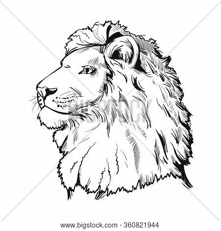 Lion Animal Muzzle Portrait In Closeup. Deep-chested Cat With Mane Looking Aside. Mammal Symbol Of P