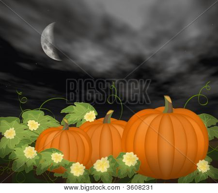 Moon Over Pumpkin Patch