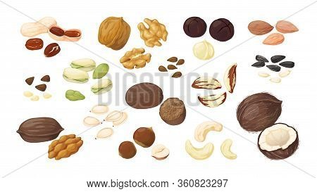 Cartoon Nuts. Almond Peanut Walnut Hazelnut Pistachio Macadamia Pecan Flax Coconut Sunflower Pumpkin
