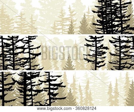 Set Of Horizontal Banners View From Coniferous Forest With Trunks Of Fir Trees And Treetops.