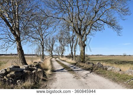 Bare Trees By A Dirt Road In A Plain Landscape On The Swedish Island Oland