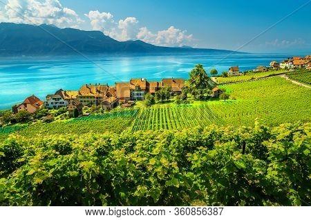 Beautiful Orderly Terraced Vineyard With Lake Geneva In Background. Green Vineyards And Vine Plantat