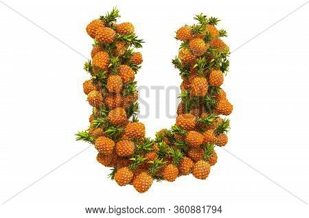 Letter U From Pineapples, 3d Rendering Isolated On  White Background